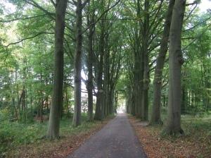 De Van Ommerenlaan in park Vreugde en Rust (foto: René Hoeflaak)