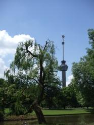 Rotterdam (foto: René Hoeflaak)