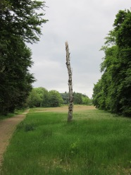 Juni 2012: Landgoed De Ruitenberg (foto: René Hoeflaak)