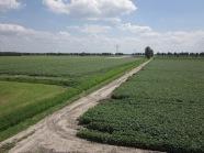 30 juni 2012: Akkervelden bij Marknesse, gemeente Noordoostpolder (foto: René Hoeflaak)