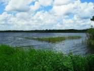 Zondag 29 juli 2012: Naardermeer (foto: René Hoeflaak)