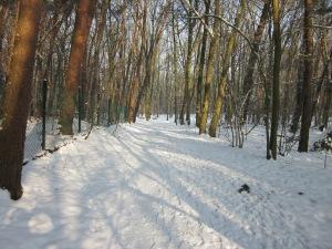 Landgoed de Wildert bij Bosschenhoofd (foto: René Hoeflaak)
