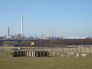 Rotterdam, 5 maart 2013: Hertenkamp in deelgemeente Pernis (foto: René Hoeflaak)
