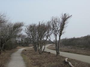 April 2013: Den Haag; Rand Westduinpark tussen Kijkduin en Scheveningen (foto: René Hoeflaak)
