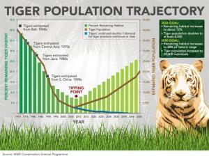 Grafiek uit 2010 van tijgerpopulatie en doelstellingen van WNF  (bron: www.wnf.nl)