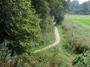 Dronten, 25 augustus 2013: Rand van het Wisentbos (foto: René Hoeflaak)