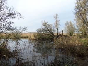 Vrijdag 8 november 2013: Nationaal Park De Brabantse Biesbosch (foto: René Hoeflaak)