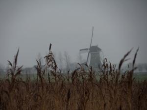 21 januari 2014: De laatste molen aan De Vlist bij Haastrecht (foto: René Hoeflaak)