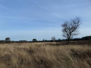Nunspeet, heideveld nabij het Horstsmeer (foto: René Hoeflaak)