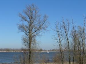 De rivier de Amer  scheidt de natuurgebied de  Bieschbosch van het vaste land van Noord-Brabant. De rivier is 12,5 kilometer lang. (foto: René Hoeflaak)