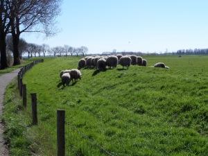 20 maart 2014: Schapendijkje tussen Lage Zwaluwe en Hooge Zwaluwe (foto: René Hoeflaak)