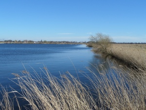 Noord-Brabant, natuurgebied Zonzeel tussen Hooge Zwaluwe en Blauwe Sluis (foto: René Hoeflaak)