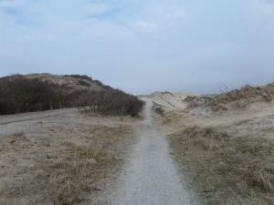 4 maart 2014: Wandelpad in natuurgebied de  Coepelduynen tussen Noordwijk en Katwijk (foto: René Hoeflaak)