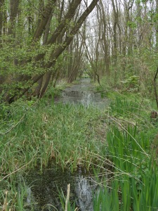 10 april 2014: Landgoed de Keukenhof (foto: René Hoeflaak)