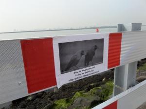 3 maart 2014, Hoek van Holland; Oproep om de Indische kraai te beschermen. Niet allen aan vuilnisbakken. (foto: René Hoeflaak)