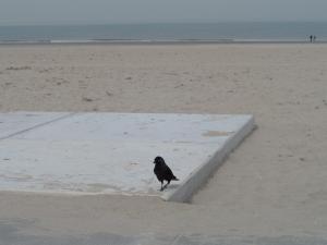 31 maart 2014: Een kauw op het strand van Hoek van Holland. De Kauw is  één van de kleinste kraaiensoorten in Nederland. (foto: René Hoeflaak)