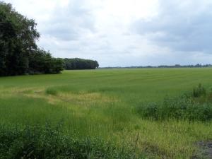 14 juni 2014: Polder op de grens van Drenthe en Overijssel. Barsweg/Drentseweg Elim.
