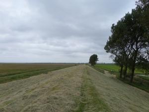 17 juni 2014: Kilometerslange gras- en voormalige zeedijk tussen De Grevelingen, natuurgebied de Slikken van Flakkee en  Dirksland (foto: René Hoeflaak)