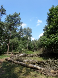 26 juni 2014: De bossen bij Oss (foto: René Hoeflaak)