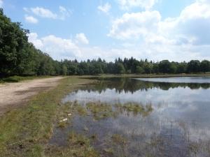 Oss, 26 juni 2014: Ven in bosgebied Herperduin (foto: René Hoeflaak)