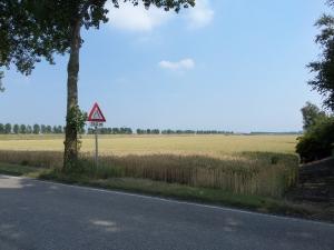 Hoofddorp, 10 juli 2014: Olifantengras? (foto: René Hoeflaak)