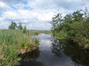 1 juli 2014: Natuurgebied De Boezem (foto: René Hoeflaak)