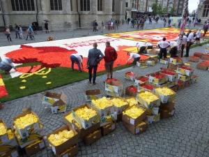 Leuven, België, 23 augustus 2014:  Aanleggen van begoniatapijt op de Grote Markt (foto: René Hoeflaak)