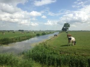 22 juli 2015: Polder in Midden-Delfland (foto: René Hoeflaak)
