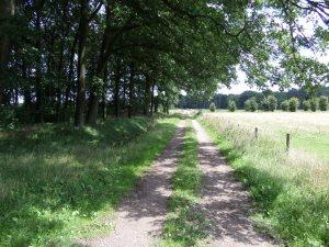31 juli 2015: een recht pad van Ossendrecht naar België (foto: René Hoeflaak)