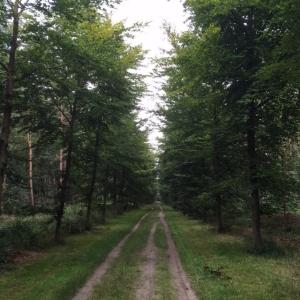 Natuurgebied de Leyens