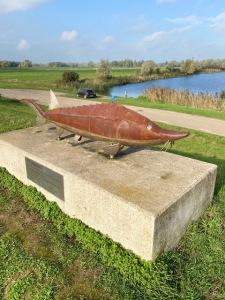 Steur in de Biesbosch