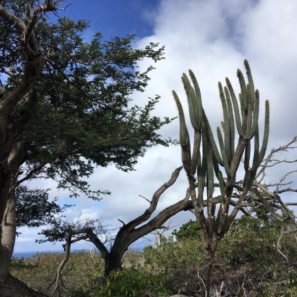 Sint-Eustatius (foto: Marion Schroen)